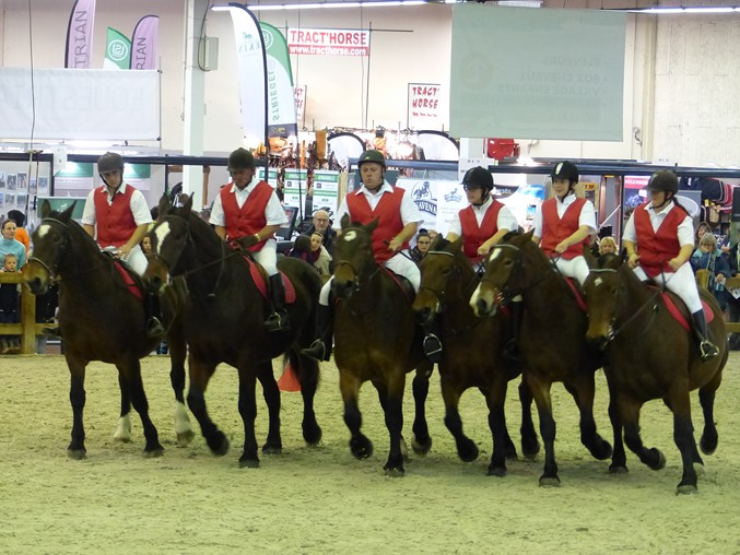 Evolution de la cavalerie Cob Normand salon d'Angers 2017