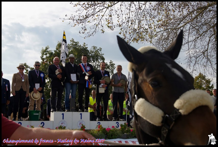 CH. DE FR. AMATEUR TRAIT 2017 PODIUM