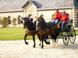 attelage en paire de 2 étalons cob normand : Royal de tuilerie et Kepi Katt AG 2011 St Lô