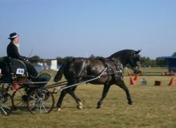 Attelage jeunes chevaux Luçon